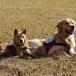 救助犬2頭